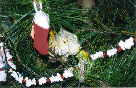 iguanatree